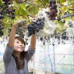 カフェのある農園で旬のフルーツ狩り!/淡路島フルーツ農園(兵庫県淡路市)