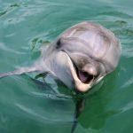 夏だ!海だ!太陽だ!さあ、イルカと泳ぎに行こう!/じゃのひれドルフィンファーム(兵庫県南あわじ市)