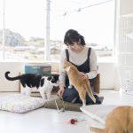 猫好き必見!淡路島唯一の猫カフェ/toneko(兵庫県洲本市)